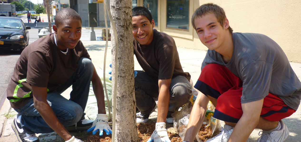 Student volunteers care for a street tree